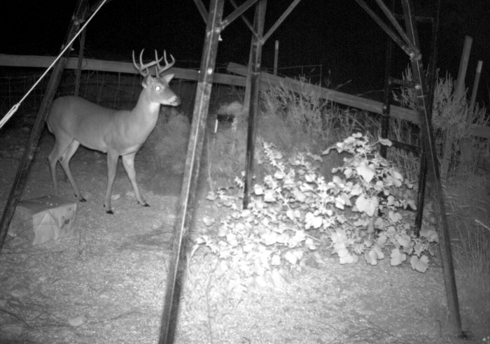 Tips For Shooting At Night with Scopes & Lamping