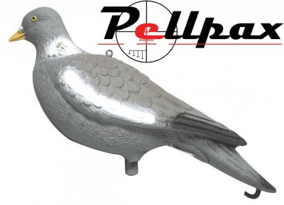 Full Bodied Pigeon