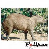 Capybara Paper Target